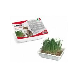 Vaschettina in plastica con semi d'orzo per Gatti, da coltivare in casa Problemi specifici Camon