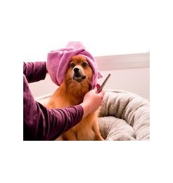 Products and accessories for the care, hygiene and well-being of your dog