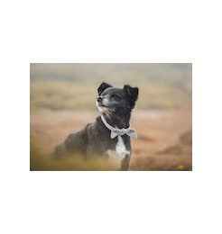 Sports or fashion accessories for your dog, always useful and highly performing