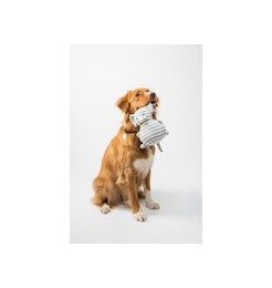 Fun games and accessories to keep the dog busy and promote intelligence