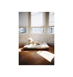Practical cushions to use at home or outdoors for your dog's primary need: rest!