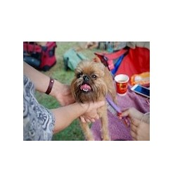 Brushing the dog has numerous benefits. Here are all the essential beauty accessories to better take care of your dog